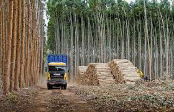 La ley de Forestación y la ley de Zonas Francas fueron logros batllistas: plantamos las semillas de la exportación de celulosa